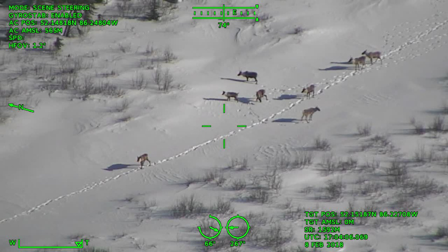 Wildlife Surveys (Visual)